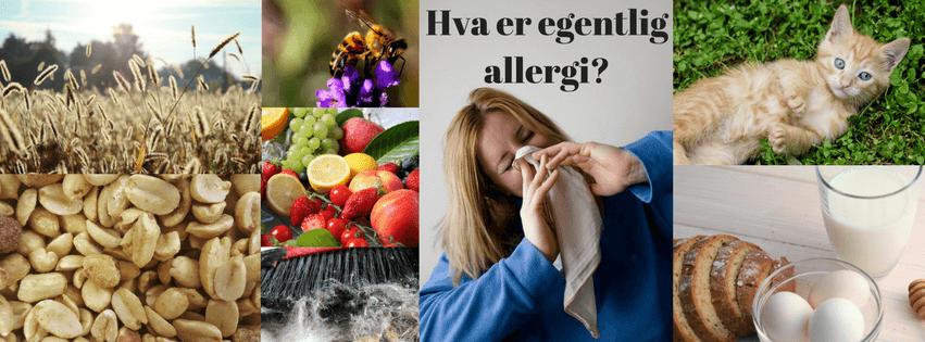 Hva er egentlig allergi-Herosa