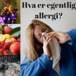 Hva er egentlig allergi-liten-Herosa